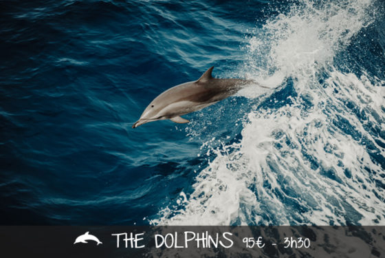 The-dolphins